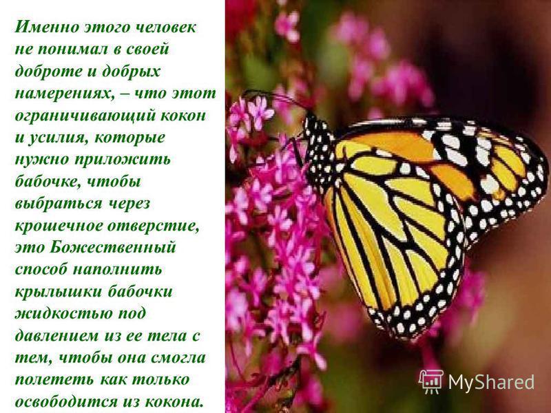 Ничего этого не произошло! На самом деле весь остаток своей жизни бабочка ползала вокруг со сморщенным телом и съежившимися крылышками. Она никогда не смогла летать.