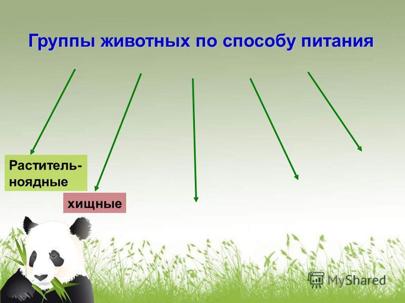 хищные Группы животных по способу питания Раститель- ноядные