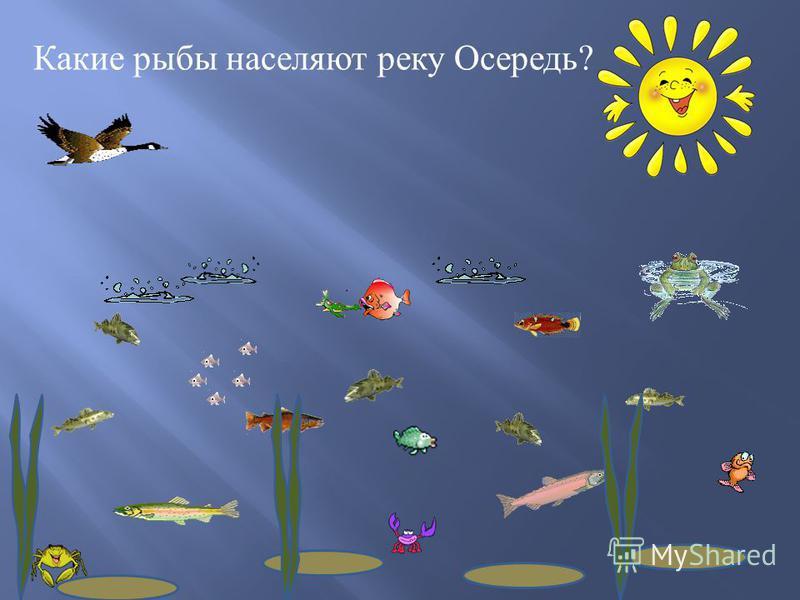 Какие рыбы населяют реку Осередь ?