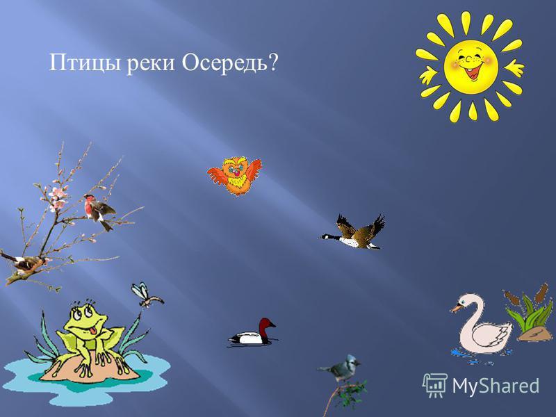 Птицы реки Осередь ?
