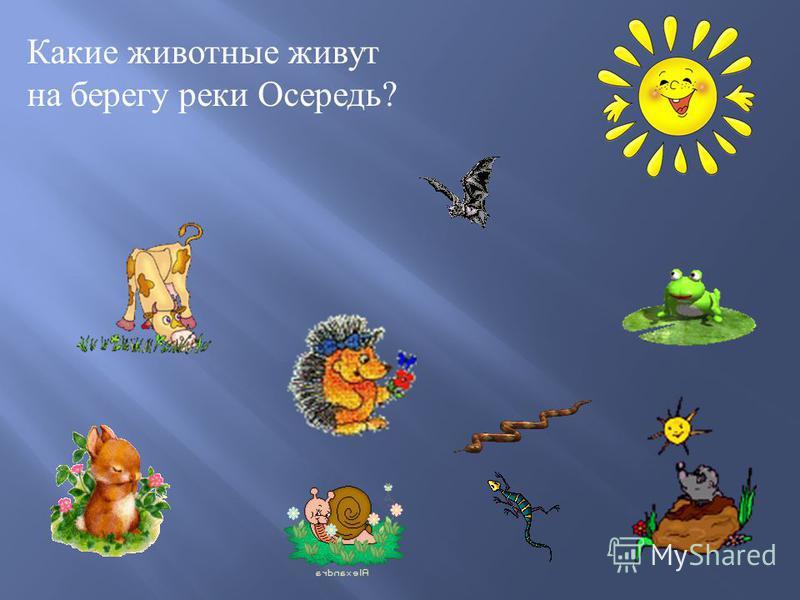 Какие животные живут на берегу реки Осередь ?