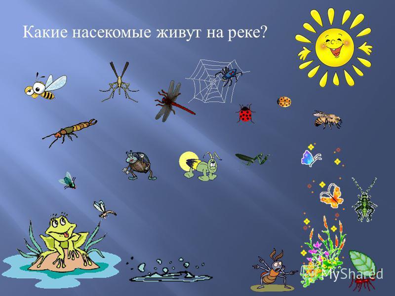 Какие насекомые живут на реке ?