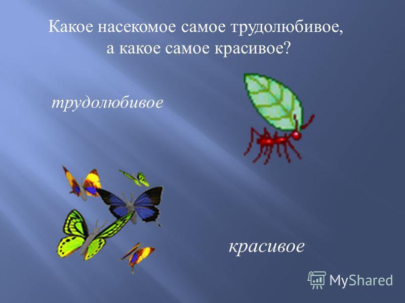 Какое насекомое самое трудолюбивое, а какое самое красивое ? трудолюбивое красивое