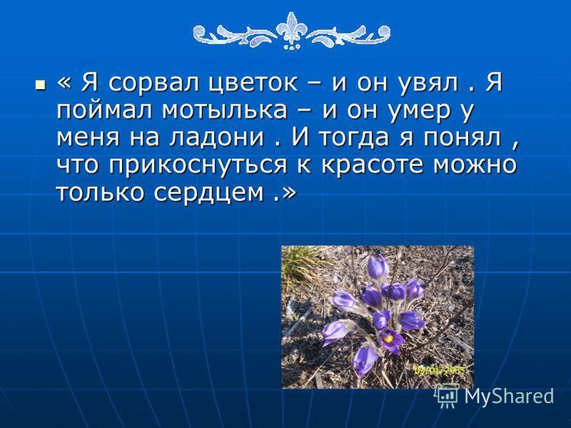« Я сорвал цветок – и он увял. Я поймал мотылька – и он умер у меня на ладони. И тогда я понял, что прикоснуться к красоте можно только сердцем.» « Я сорвал цветок – и он увял. Я поймал мотылька – и он умер у меня на ладони. И тогда я понял, что прик