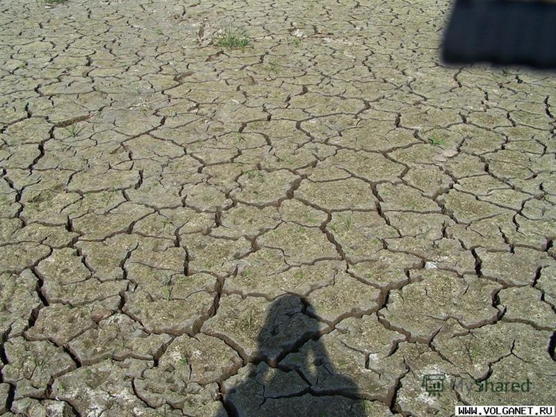 Экологические проблемы. - Загрязнение вод ; - Загрязнение вод ; - Уничтожение лесов ; - Уничтожение лесов ; - Загрязнение воздуха ; - Загрязнение воздуха ; - Деградация земель ; - Деградация земель ;