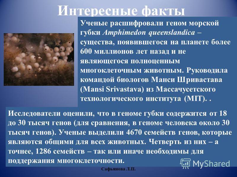 Интересные факты Ученые расшифровали геном морской губки Amphimedon queenslandica – существа, появившегося на планете более 600 миллионов лет назад и не являющегося полноценным многоклеточным животным. Руководила командой биологов Манси Шривастава (M