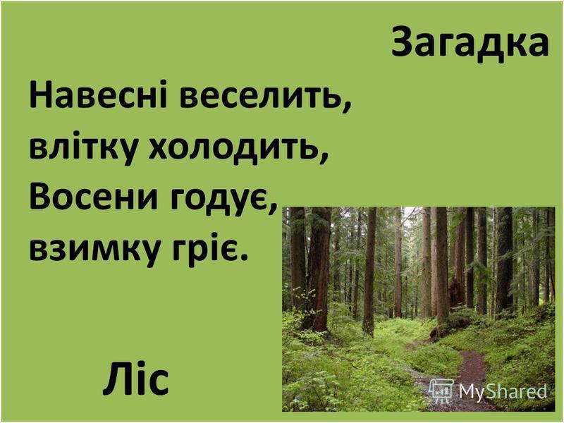 Загадка Навесні веселить, влітку холодить, Восени годує, взимку гріє. Ліс