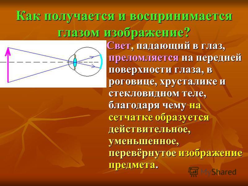 Как получается и воспринимается глазом изображение? Свет, падающий в глаз, преломляется на передней поверхности глаза, в роговице, хрусталике и стекловидном теле, благодаря чему на сетчатке образуется действительное, уменьшенное, перевёрнутое изображ