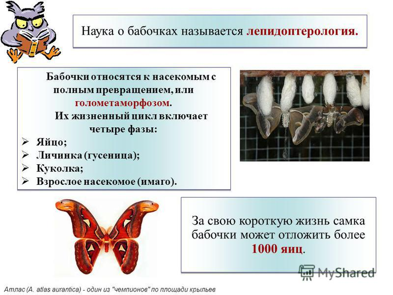Наука о бабочках называется лепидоптерология. За свою короткую жизнь самка бабочки может отложить более 1000 яиц. Бабочки относятся к насекомым с полным превращением, или голометаморфозом. Их жизненный цикл включает четыре фазы: Яйцо; Личинка (гусени