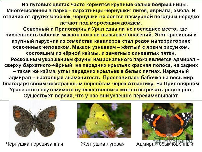 На луговых цветах часто кормятся крупные белые боярышницы. Многочисленны в парке – бархатницы-чернушки: лигея, эвриала, эмбла. В отличие от других бабочек, чернушки не боятся пасмурной погоды и нередко летают под моросящим дождём. Северный и Приполяр