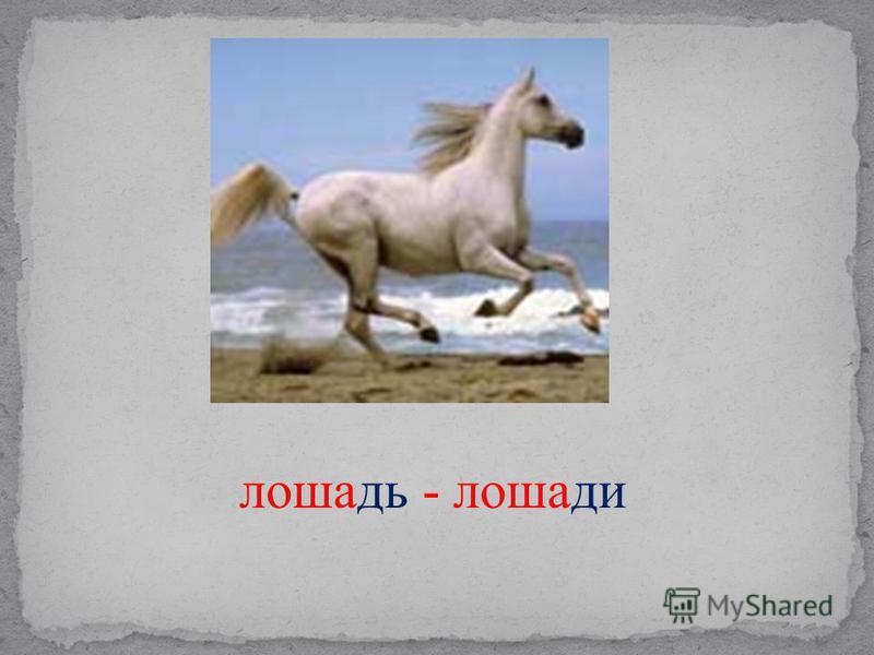 лошадь - лошади