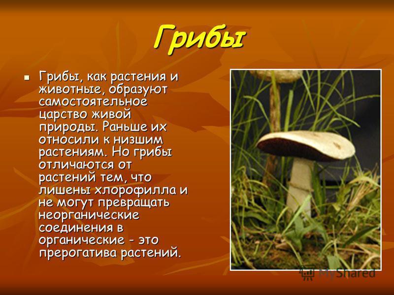Грибы Грибы, как растения и животные, образуют самостоятельное царство живой природы. Раньше их относили к низшим растениям. Но грибы отличаются от растений тем, что лишены хлорофилла и не могут превращать неорганические соединения в органические - э