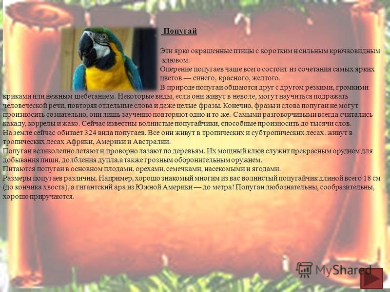 Пеликан Н а земле обитает 7 видов пеликанов. Самый распространённый из них – розовый пеликан. Его вес 14 килограммов, а размах крыльев 2,5 метра. Характерная особенность этих больших светло окрашенных птиц – кожистый мешок под клювом, напоминающий дл