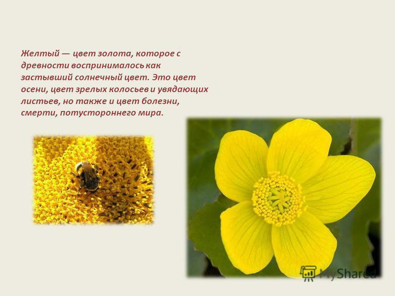 Желтый цвет золота, которое с древности воспринималось как застывший солнечный цвет. Это цвет осени, цвет зрелых колосьев и увядающих листьев, но также и цвет болезни, смерти, потустороннего мира.