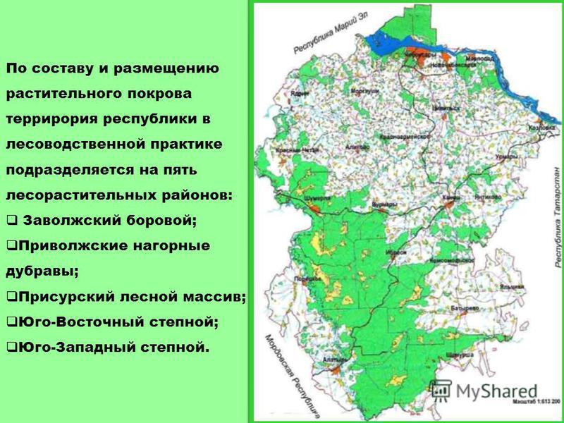 Леса Тайга Смешанные леса Широколиственные леса