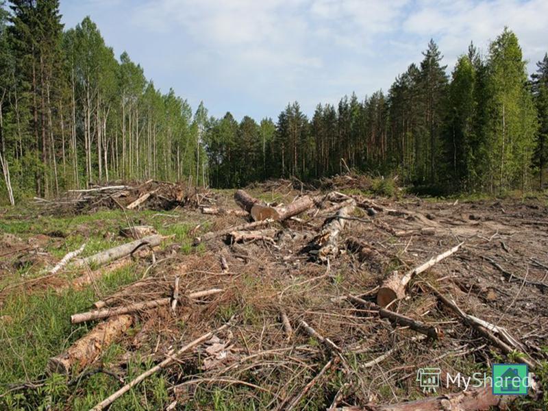Экологические проблемы леса Вырубка леса Загрязнение леса бытовым мусором Пожары Неумеренная охота и браконьерство