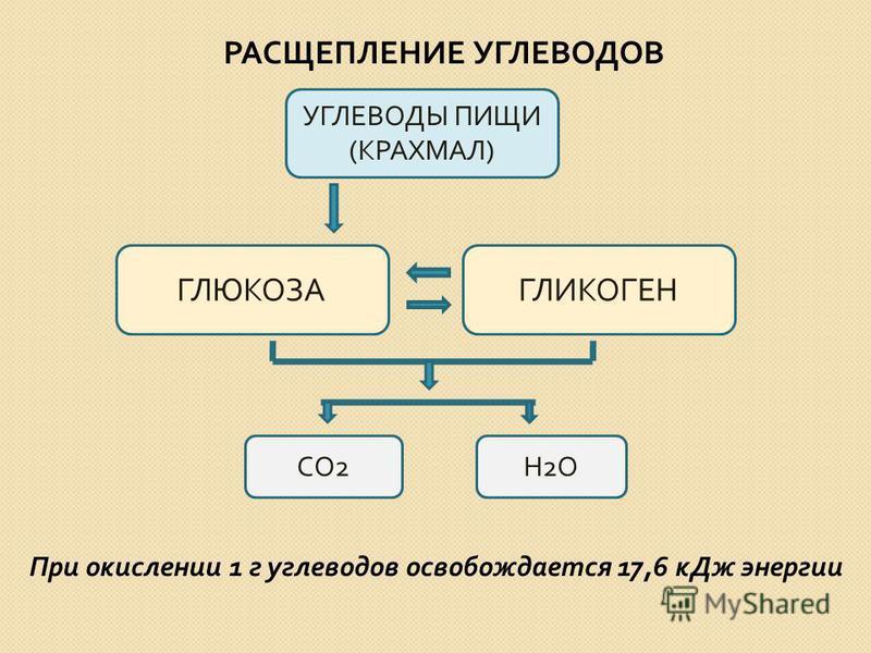 РАСЩЕПЛЕНИЕ УГЛЕВОДОВ Н2ОН2О УГЛЕВОДЫ ПИЩИ ( КРАХМАЛ ) ГЛЮКОЗАГЛИКОГЕН СО 2 При окислении 1 г углеводов освобождается 17,6 к Дж энергии