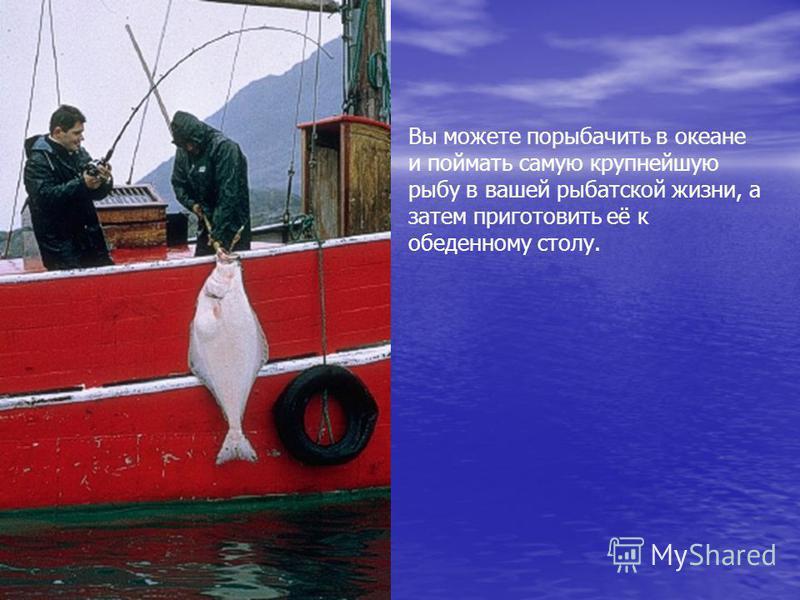 Вы можете порыбачить в океане и поймать самую крупнейшую рыбу в вашей рыбатской жизни, а затем приготовить её к обеденному столу.