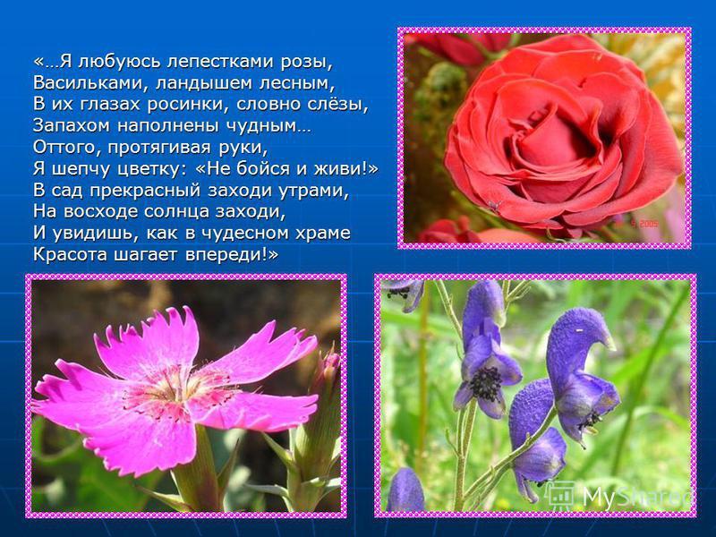 «…Я любуюсь лепестками розы, Васильками, ландышем лесным, В их глазах росинки, словно слёзы, Запахом наполнены чудным… Оттого, протягивая руки, Я шепчу цветку: «Не бойся и живи!» В сад прекрасный заходи утрами, На восходе солнца заходи, И увидишь, ка