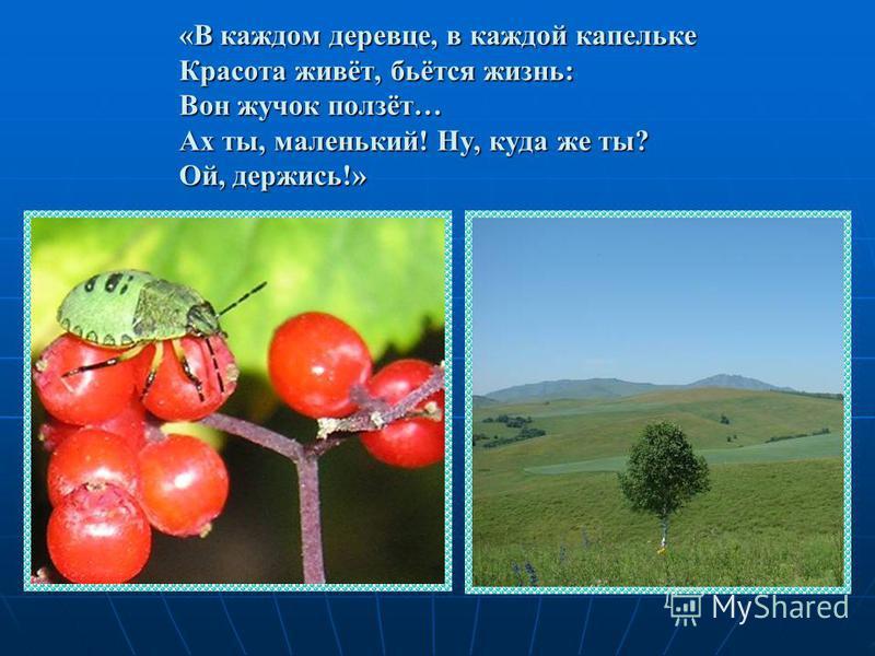 «В каждом деревце, в каждой капельке Красота живёт, бьётся жизнь: Вон жучок ползёт… Ах ты, маленький! Ну, куда же ты? Ой, держись!»