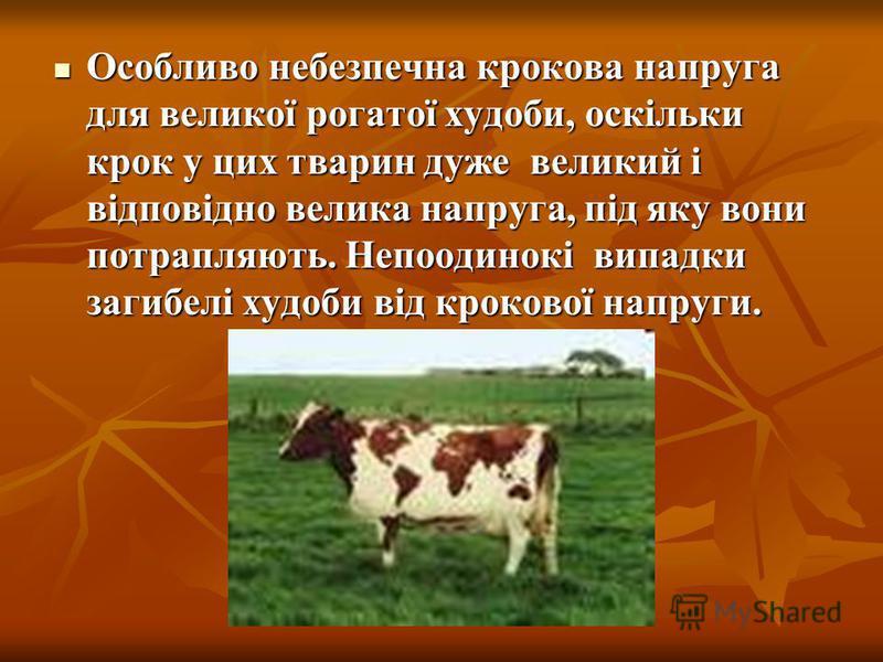 Особливо небезпечна крокова напруга для великої рогатої худоби, оскільки крок у цих тварин дуже великий і відповідно велика напруга, під яку вони потрапляють. Непоодинокі випадки загибелі худоби від крокової напруги. Особливо небезпечна крокова напру