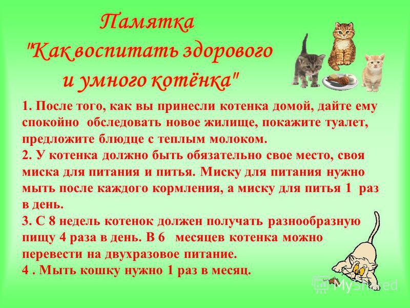 1. После того, как вы принесли котенка домой, дайте ему спокойно обследовать новое жилище, покажите туалет, предложите блюдце с теплым молоком. 2. У котенка должно быть обязательно свое место, своя миска для питания и питья. Миску для питания нужно м
