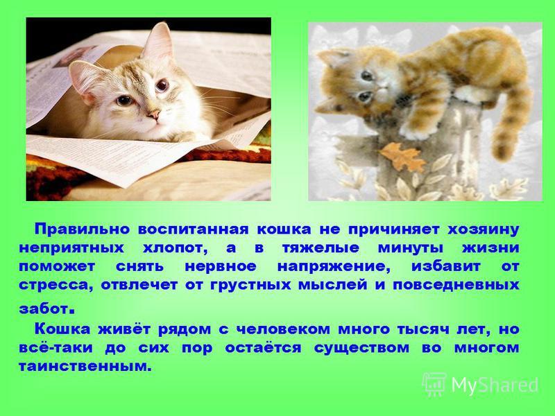 Правильно воспитанная кошка не причиняет хозяину неприятных хлопот, а в тяжелые минуты жизни поможет снять нервное напряжение, избавит от стресса, отвлечет от грустных мыслей и повседневных забот. Кошка живёт рядом с человеком много тысяч лет, но всё