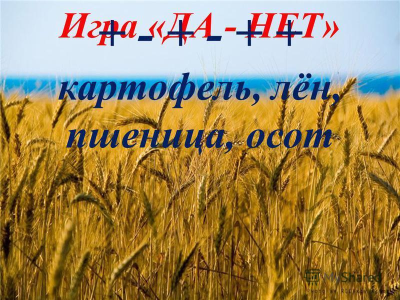 Игра «ДА - НЕТ» + - + - + + картофель, лён, пшеница, осот
