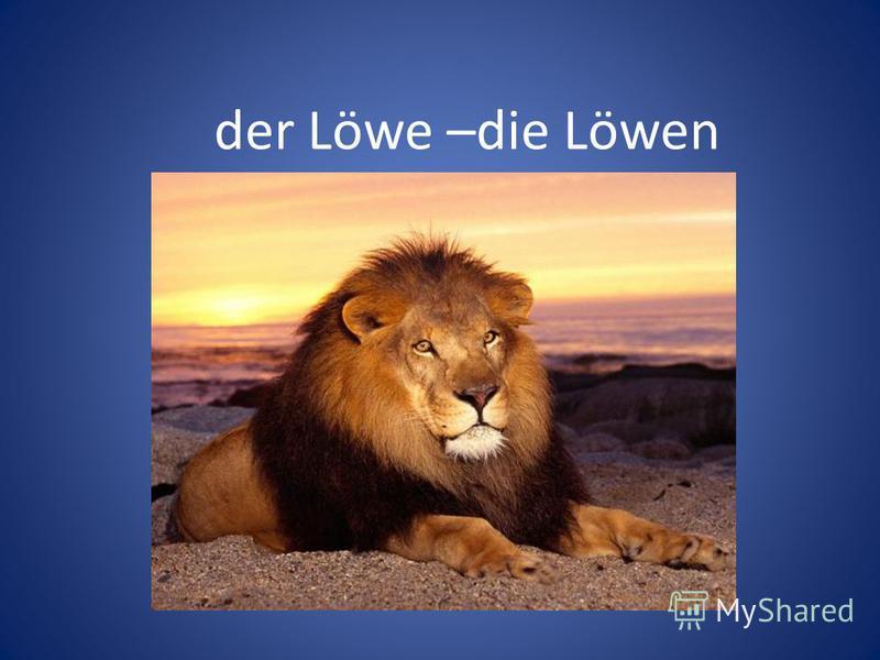 der Löwe –die Löwen