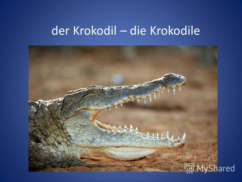 der Krokodil – die Krokodile