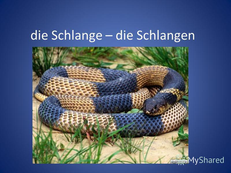 die Schlange – die Schlangen