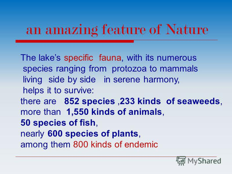 The lakes specific fauna, with its numerous species ranging from protozoa to mammals living side by side in serene harmony, helps it to survive: there are 852 species,233 kinds of seaweeds, more than 1,550 kinds of animals, 50 species of fish, nearly