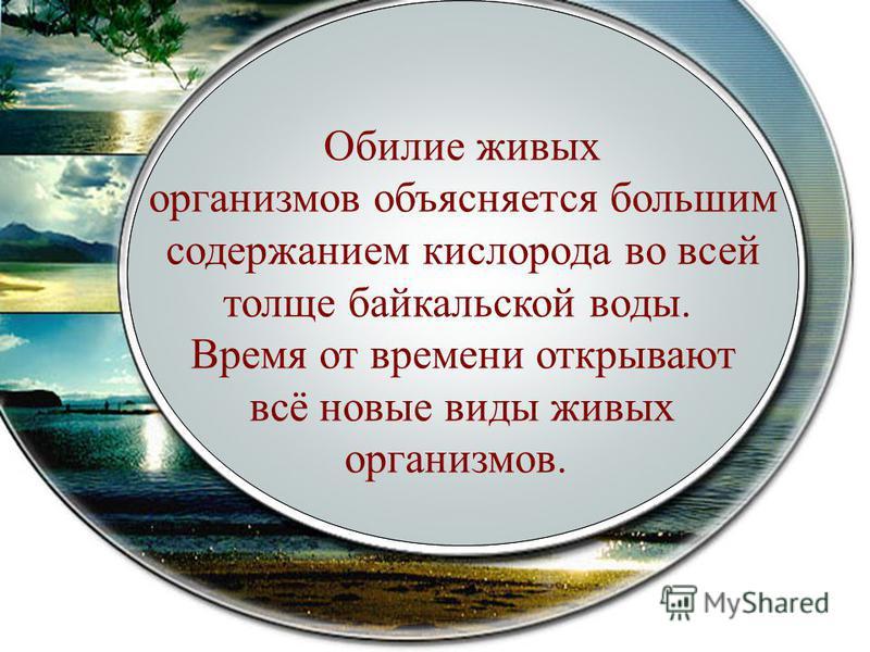 В Байкале водится более 2600 видов и разновидностей животных и более 1000 видов растительных организмов, 2/3 которых обитают только в этом водоёме, т. е. являются эндемиками Обилие живых организмов объясняется большим содержанием кислорода во всей то