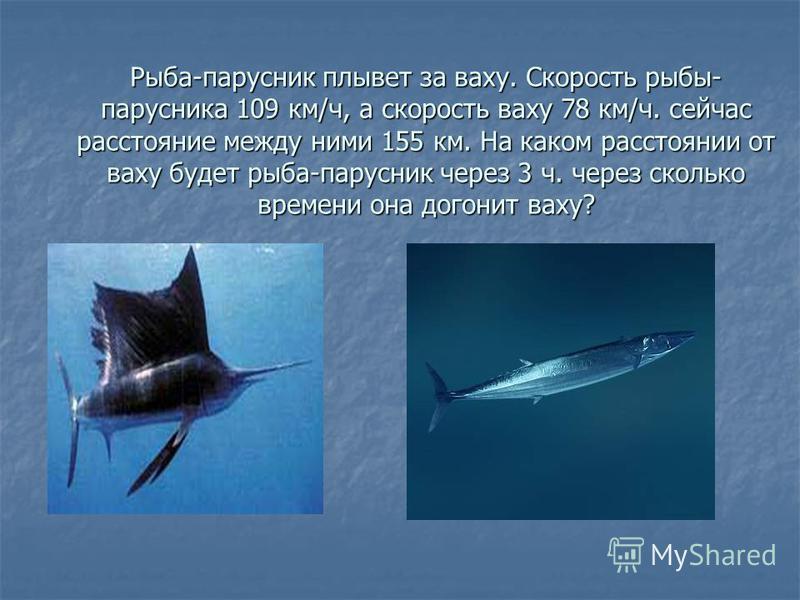 Рыба-парусник плывет за вахту. Скорость рыбы- парусника 109 км/ч, а скорость вахту 78 км/ч. сейчас расстояние между ними 155 км. На каком расстоянии от вахту будет рыба-парусник через 3 ч. через сколько времени она догонит вахту?