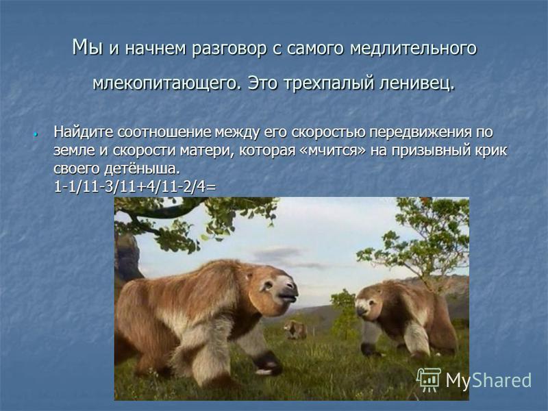 Мы и начнем разговор с самого медлительного млекопитающего. Это трехпалый ленивец. Найдите соотношение между его скоростью передвижения по земле и скорости матери, которая «мчится» на призывный крик своего детёныша. 1-1/11-3/11+4/11-2/4= Найдите соот