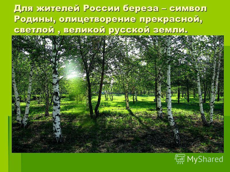 Для жителей России береза – символ Родины, олицетворение прекрасной, светлой, великой русской земли.