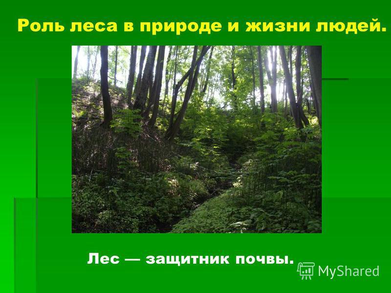 Роль леса в природе и жизни людей. Лес защитник почвы.