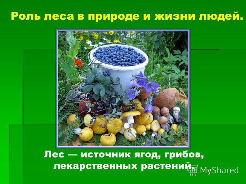 Роль леса в природе и жизни людей. Лес источник ягод, грибов, лекарственных растений.