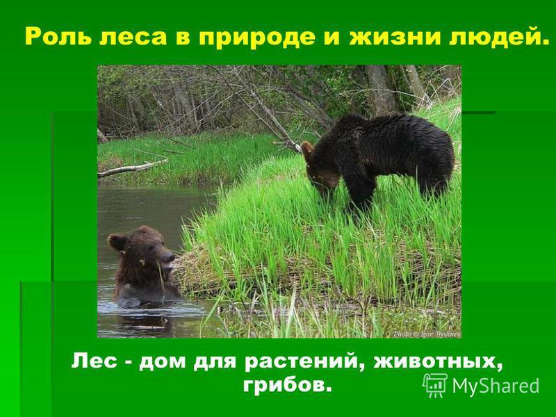 Роль леса в природе и жизни людей. Лес - дом для растений, животных, грибов.