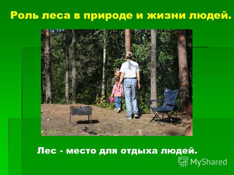 Роль леса в природе и жизни людей. Лес - место для отдыха людей.