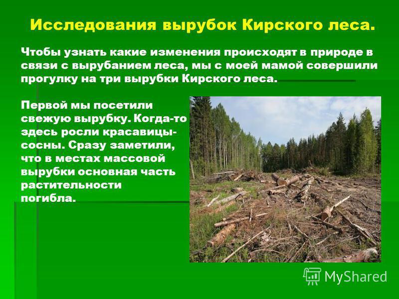 Исследования вырубок Кирского леса. Чтобы узнать какие изменения происходят в природе в связи с вырубанием леса, мы с моей мамой совершили прогулку на три вырубки Кирского леса. Первой мы посетили свежую вырубку. Когда-то здесь росли красавицы- сосны