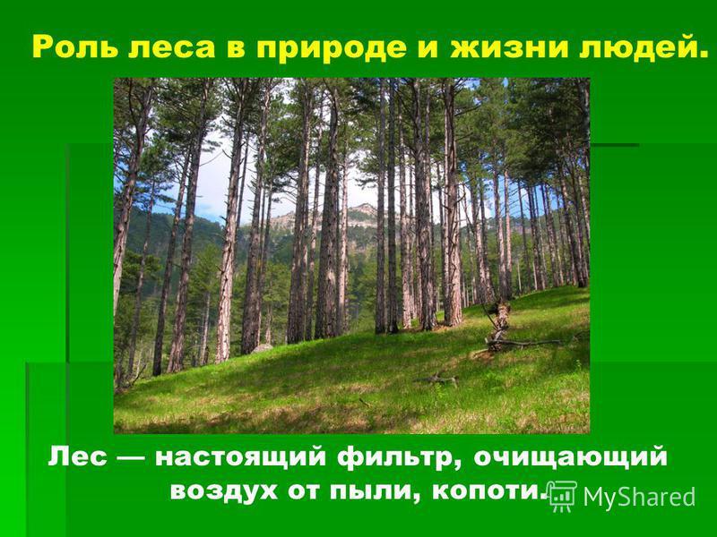 Лес настоящий фильтр, очищающий воздух от пыли, копоти.