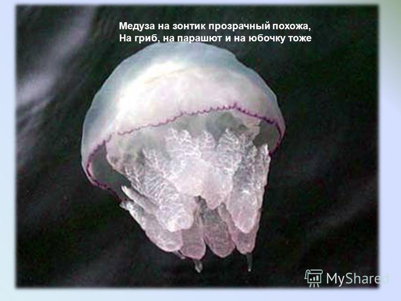 Медуза на зонтик прозрачный похожа, На гриб, на парашют и на юбочку тоже