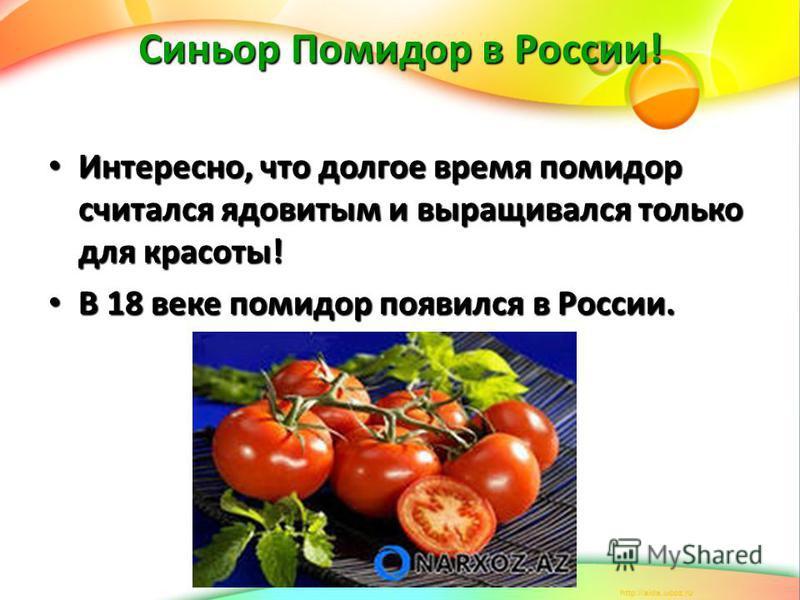 Синьор Помидор в России! Интересно, что долгое время помидор считался ядовитым и выращивался только для красоты! Интересно, что долгое время помидор считался ядовитым и выращивался только для красоты! В 18 веке помидор появился в России. В 18 веке по