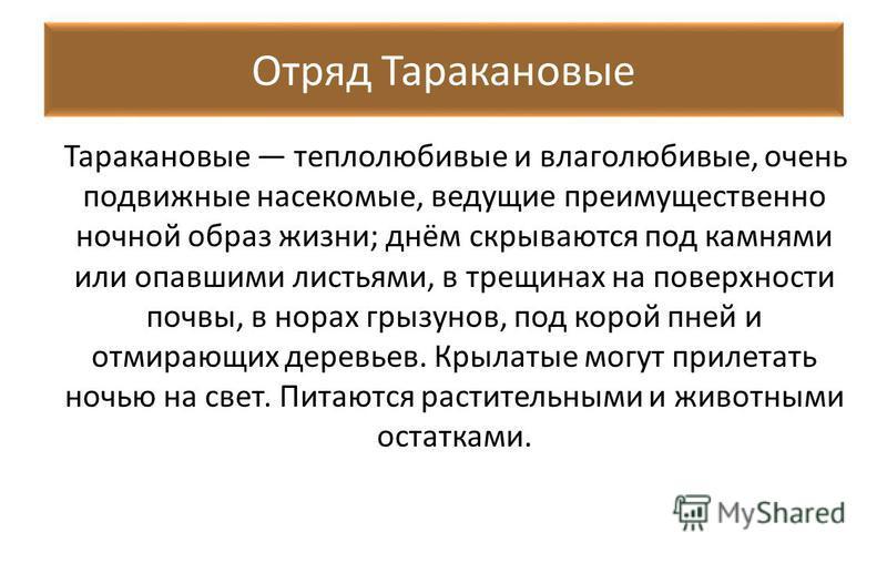 Отряд Таракановые