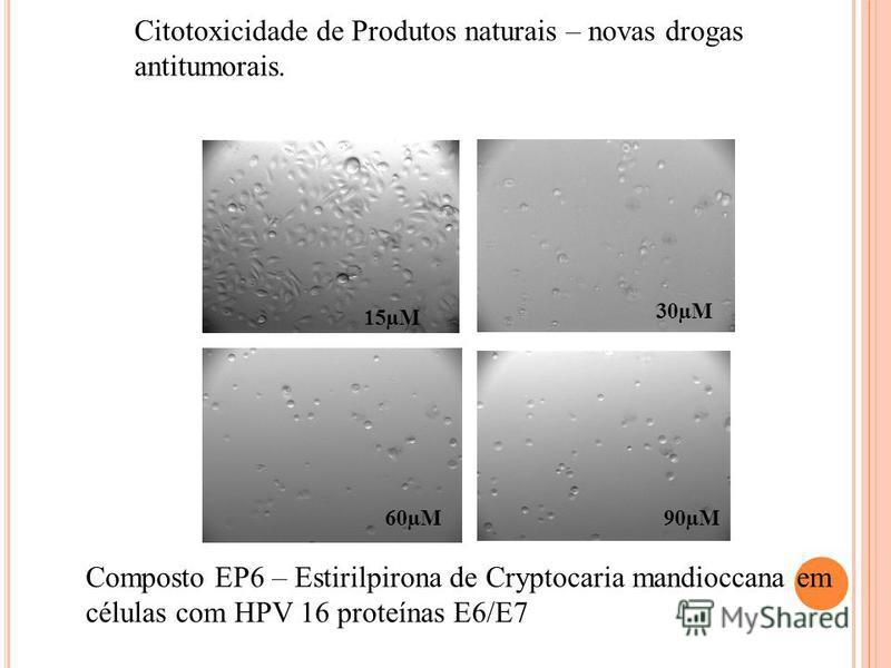 15µM 30µM 60µM90µM Citotoxicidade de Produtos naturais – novas drogas antitumorais. Composto EP6 – Estirilpirona de Cryptocaria mandioccana em células com HPV 16 proteínas E6/E7