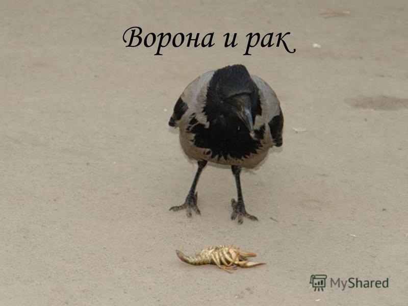 Ворона и рак