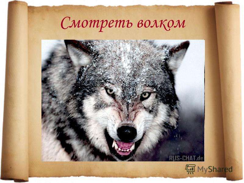 Смотреть волком