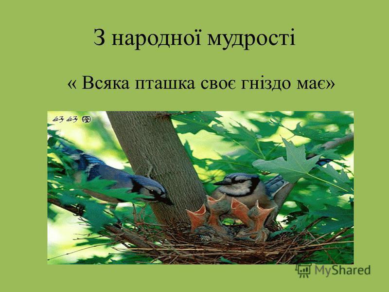 З народної мудрості « Всяка пташка своє гніздо має»