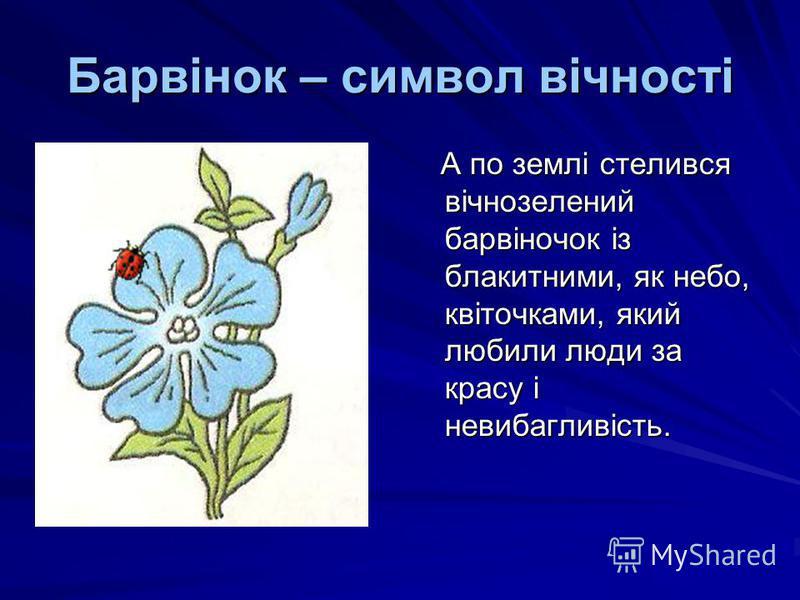 Барвінок – символ вічності А по землі стелився вічнозелений барвіночок із блакитними, як небо, квіточками, який любили люди за красу і невибагливість. А по землі стелився вічнозелений барвіночок із блакитними, як небо, квіточками, який любили люди за